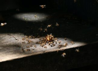 How to kill winged termites?